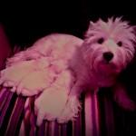 Cachorros de Pequeño Saltamontes Demerino con Vera