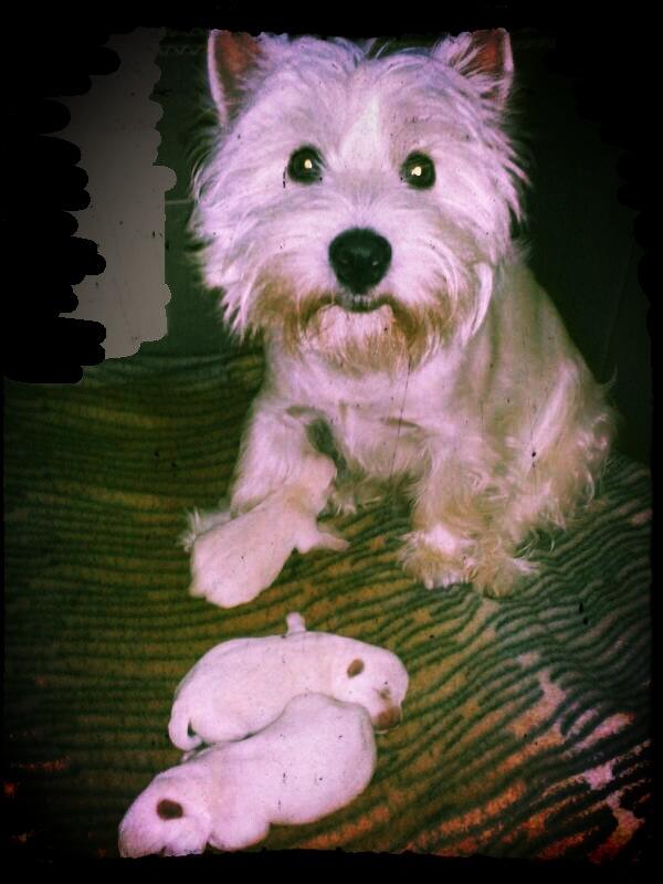 Cachorros de Pequeño Saltamontes Demerino y Vera, con menos de una semana