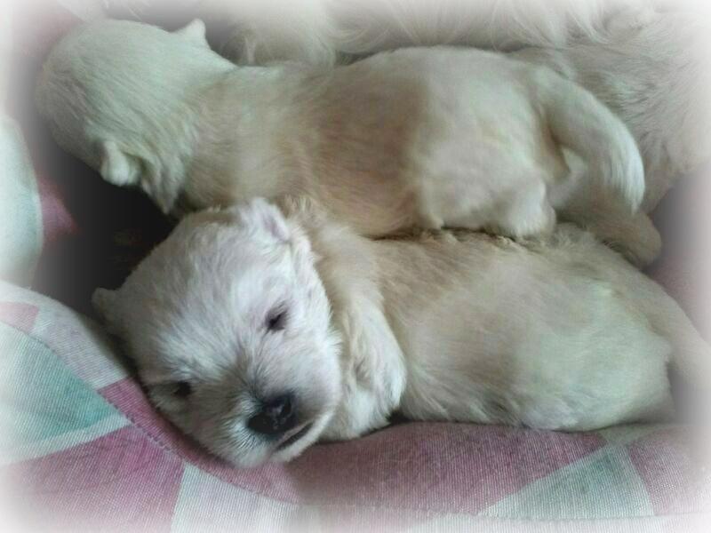 Cachorros de Vera y Pequeño Saltamontes Demerino con 2 semanas