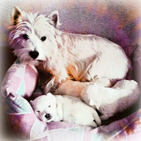 Cachorros de Pequeño Saltamontes Demerin con Voera, dos semanas