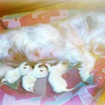 Cachorrs de Vera y Pequeño Saltamontes Demerinomamando, con menos de una semana