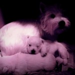 Cachorros de la camada de Pequeño Saltamontes Demerino y Vera, durmiendo con mamá