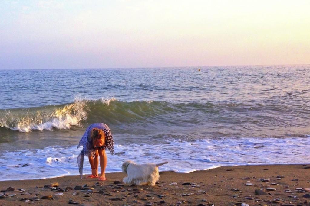 Westie Demerino jugando en la playa de Málaga