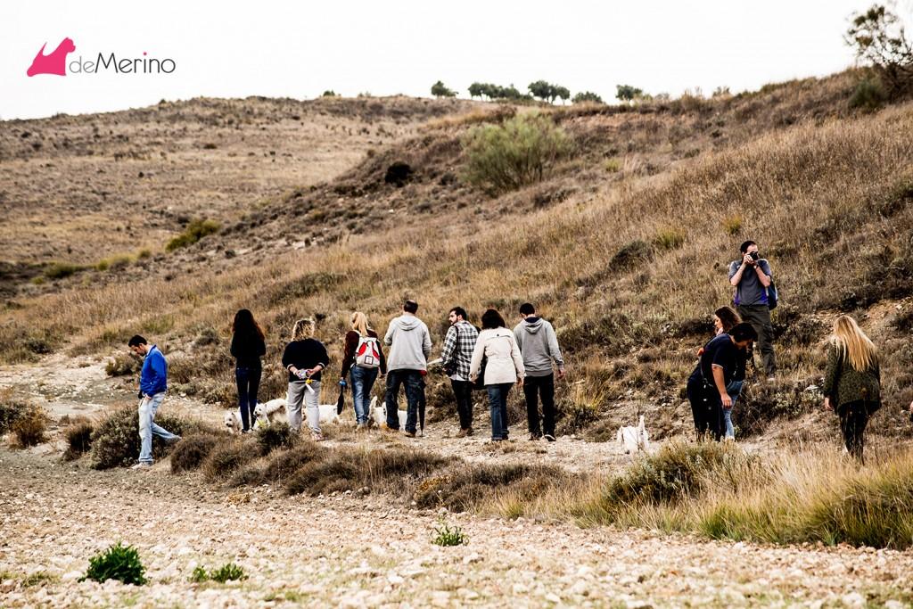 Paseo con los mejores westies: el paseo desde atrás