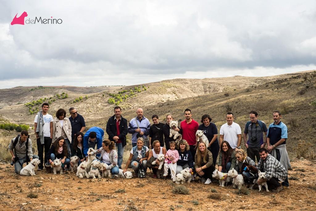 Paseo con los mejores westies: foto del grupo de paseo