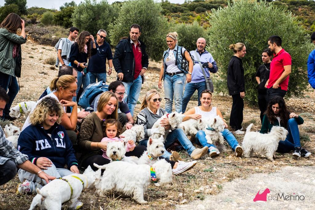 Paseo con los mejores westies: foto del grupo de paseo descansando