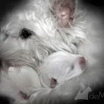 Vhella Demerino abrazando a su cachorro