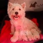 Vhella Demerino amamantando a sus cachorros de 8 días