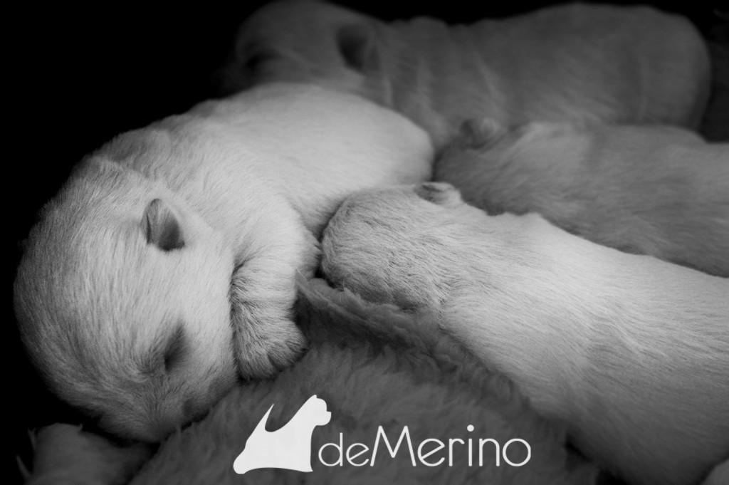 Cachorros de 10 días durmiendo