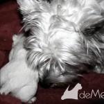 20141108-cachorros-VhellaDemerino-003