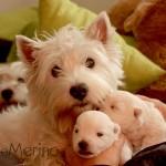 Vhella Demerino con dos cachorros de su camada, en el sofa de casa