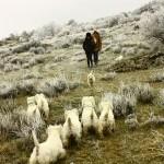 Paseo de westies Demerino y amigos por la sierra de Segovia, por la nieve