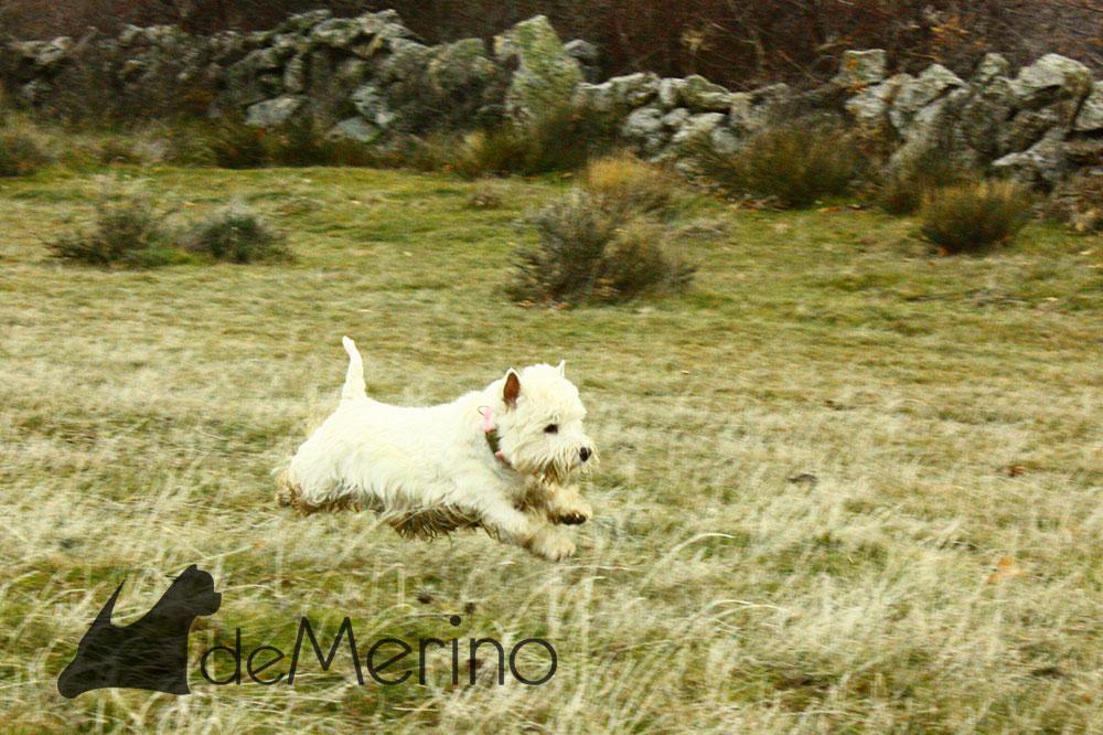 Katana Demerino corriendo en el campo
