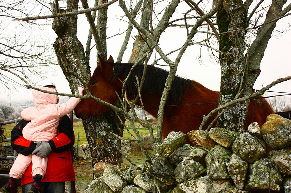 De paseo por la yerra de Segovia, acariciando un caballo