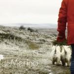 Paseo de westies Demerino y amigos por la sierra de Segovia, paseando