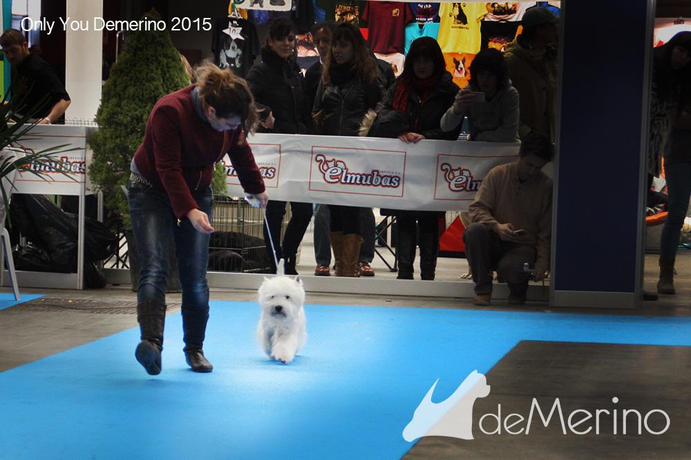 Only You Demerino desfilando en la XXXV Exposición Nacional de Valladolid 2015
