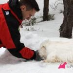 Construyendo un westie de nieve: amontonando la nieve