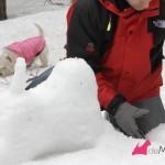 Construyendo un westie de nieve: preparando la cabeza