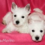 Brujita Demerino y Boss Demerino con una manta rosa