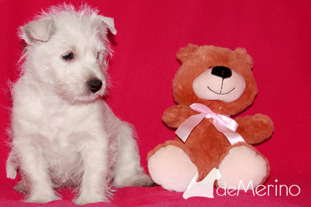 Con Cariño Demerino con oso de peluche