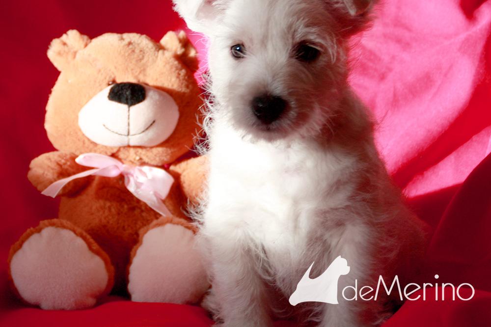 Con Cariño Demerino con un oso de peluche