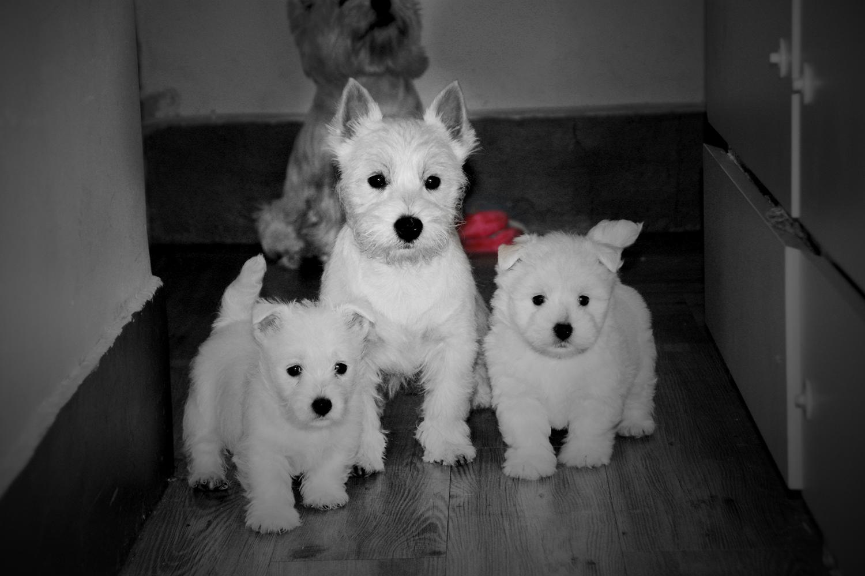 Cachorros de med y medio y cuatro meses jugando en el pasillo de casa